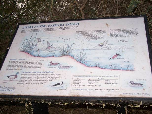 Divers Patter, Dabblers Explode: sign at Riparian Preserve Water Ranch