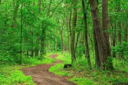Forest path copyright AVTG iStockPhoto #000004012378