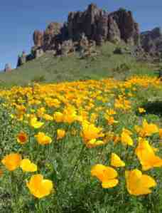 Superstition Mountains AZ with golden poppies