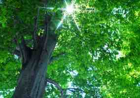 Tree in sunlight copyright_ooyoo_iStock_5889617