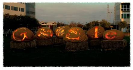 Google giant pumpkins 10 31 2011